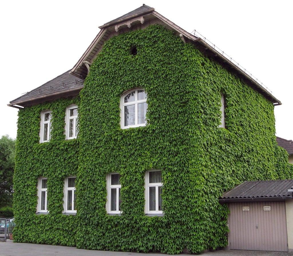 grüne Fassade origineller Look Haus