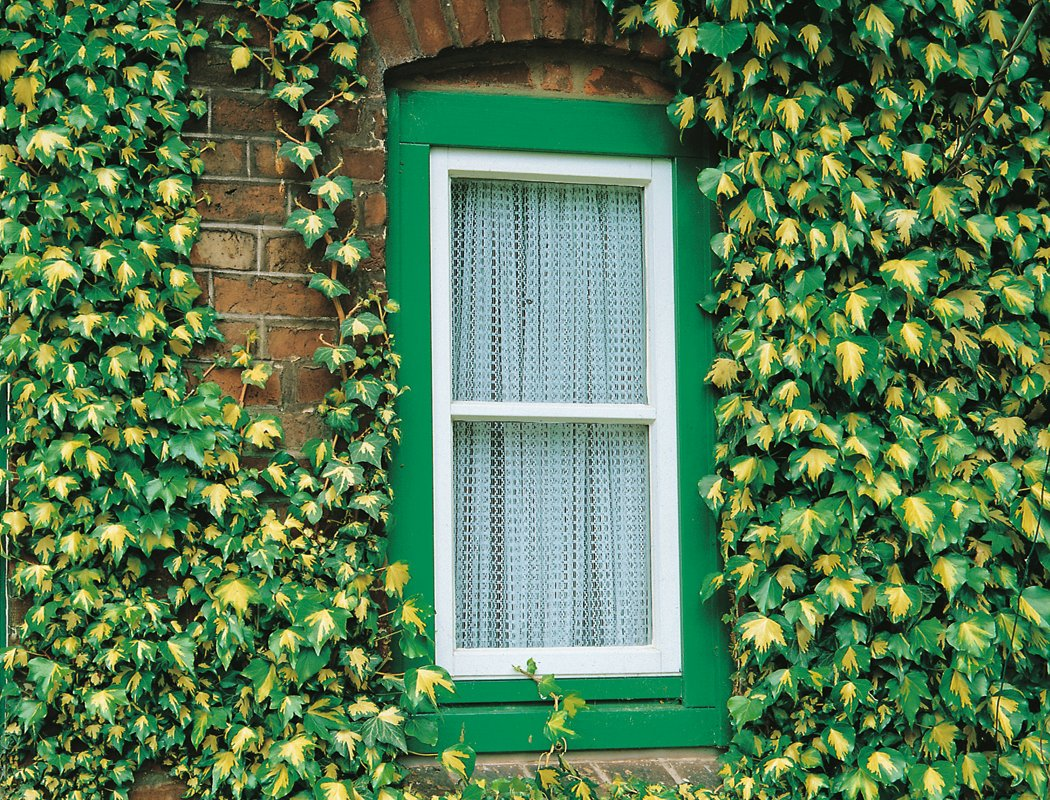grüne Fassade nötige Pflegen