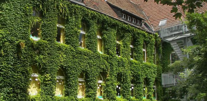 Fassade begrünen Vor- und Nachteile