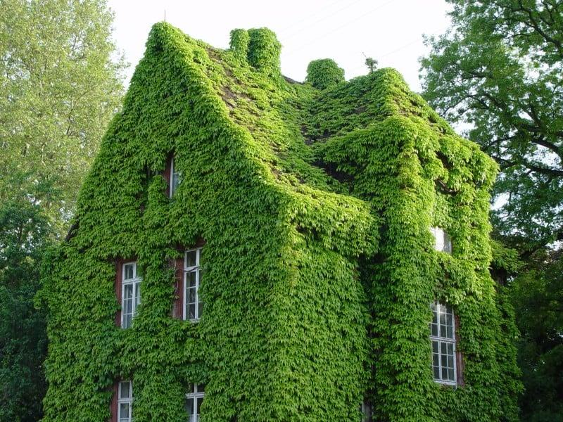 Haus grüne Fassade und Dach märchenhafter Look