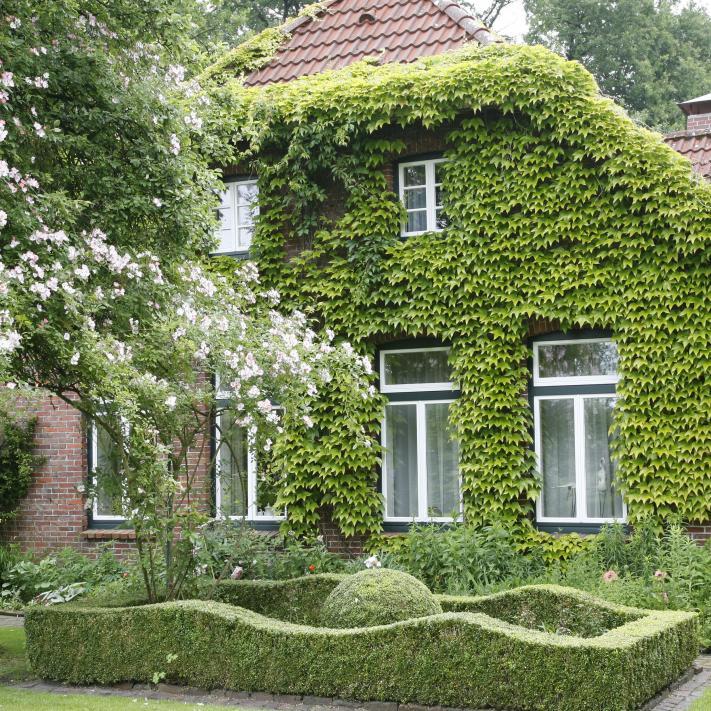 Fassade Begrünen