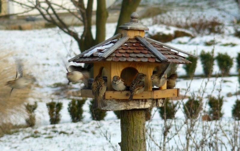 Vogelfutterhaus bauen Winter