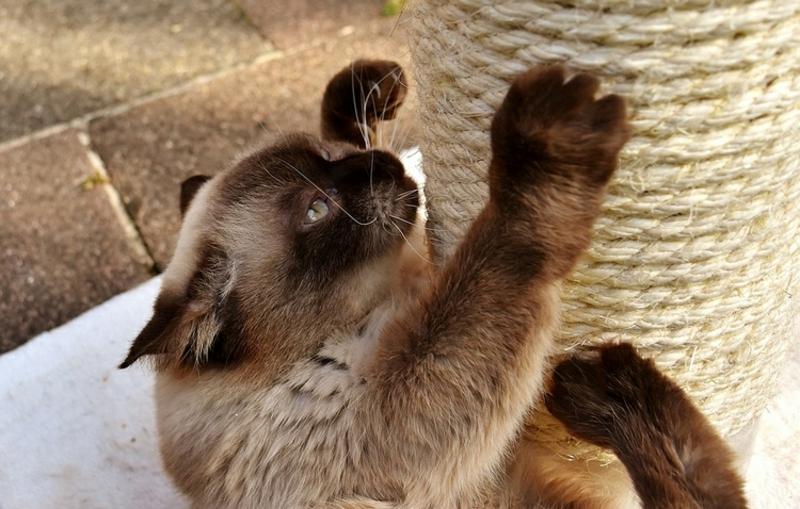 Katzenbaum selber bauen Seil