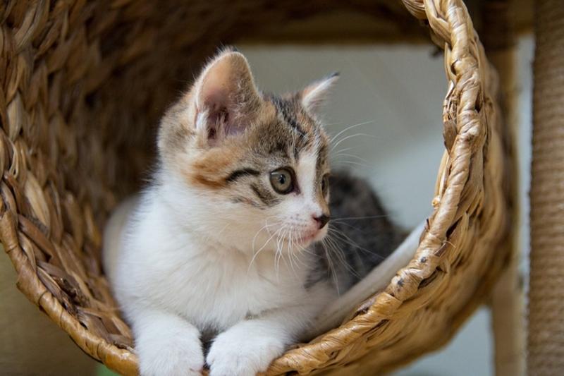 Spilplatz für die Katze gestalten Tipp