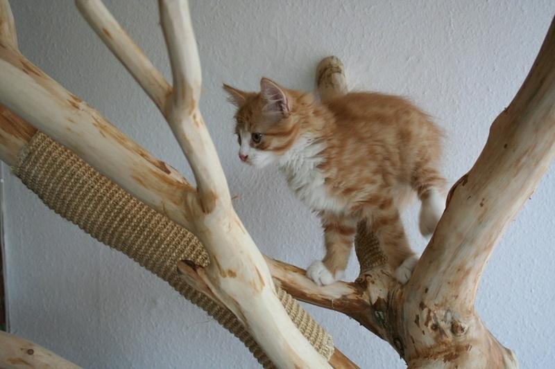 Katzenbaum selber bauen aus großem Baumzweig tolle Idee