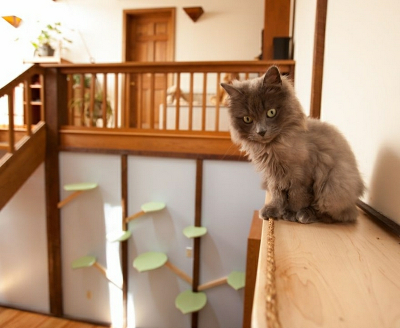 Katzenbaum einzelne Plattformen an der Wand montiert