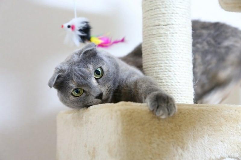 Kratzbaum DIY Katze