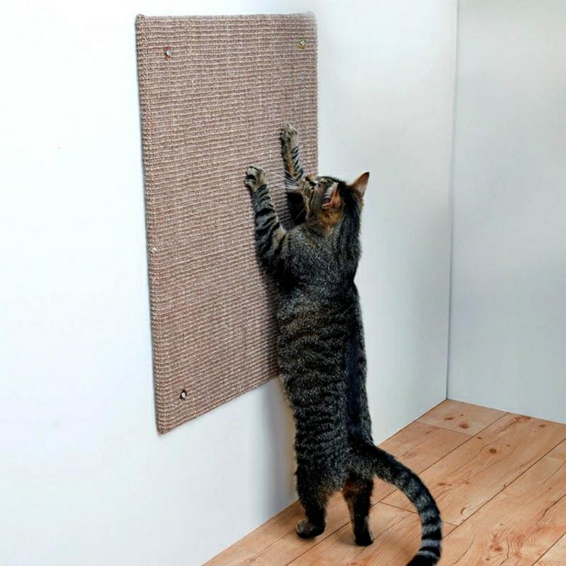 Kratzoberfläche an der Wand Katze