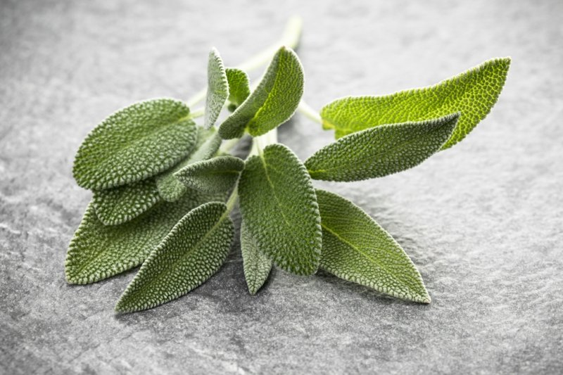 Fruchtsäurepeeling Rezept mit Salbei