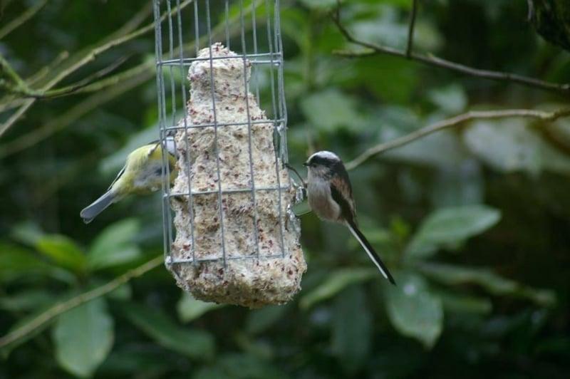 Vogelfutter aufhängen Draht Garten
