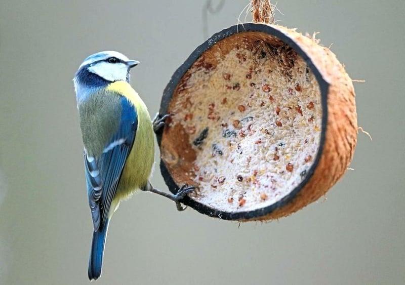 Vogelfutter Kokosnuss Schale originelle Idee