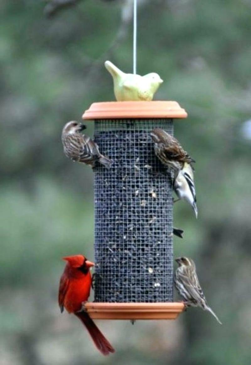 Vogelfutterhaus montieren Garten