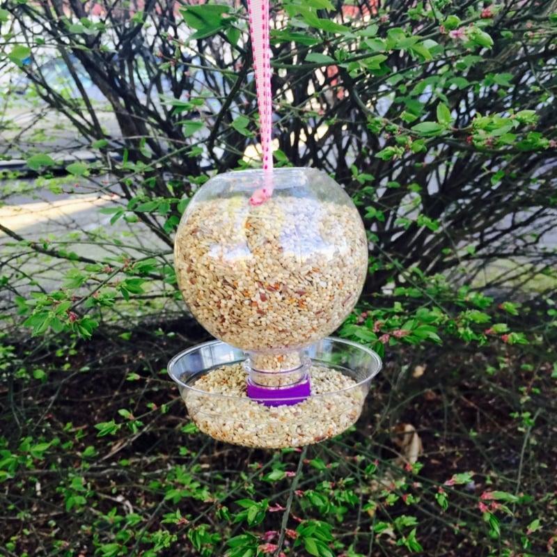 Vogelhaus selbstgemacht Plastikflasche Einwegteller