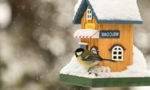 Vogelfutterhaus DIY Ideen und Anregungen