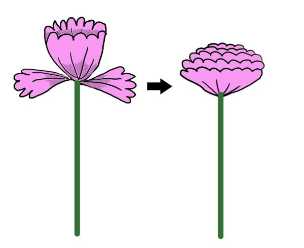 Blumen aus Seidenpapier Anleitung die Blüte öffnen