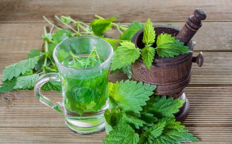 Brennessel Tee selber zubereiten Anleitung
