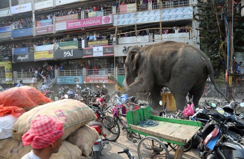 Bilder ungewöhnlich Elefant Stadt