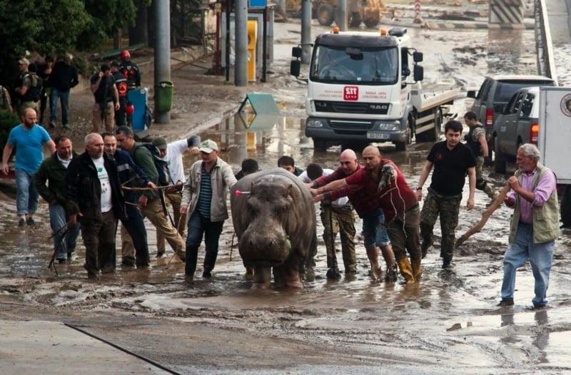 Hippo Menschen