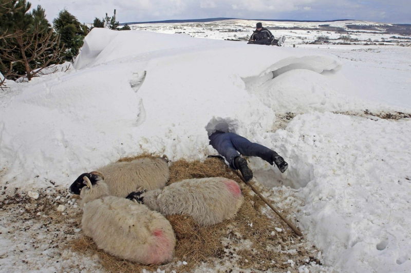 Bilder zum Nachdenken Winter Hirt Schafe