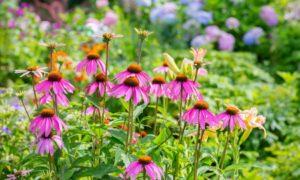 winterharte Stauden tolle Ideen für den eigenen Garten
