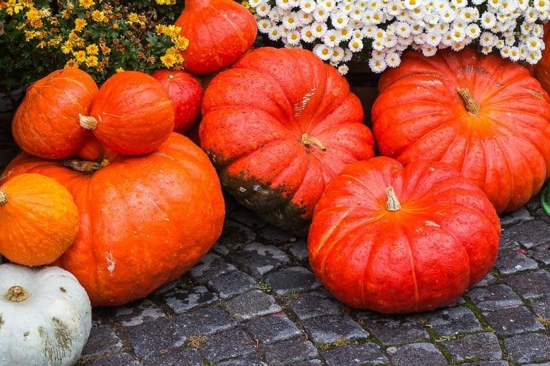 Speisekürbis tolle Herbstdeko