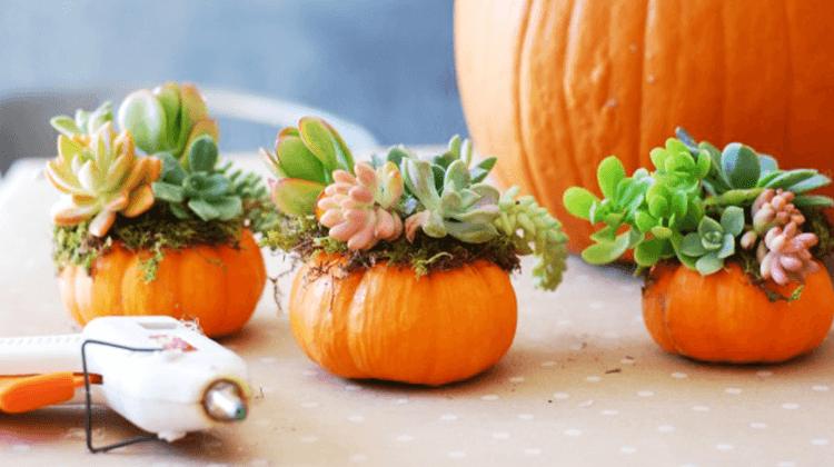 aus Zierkürbissen Blumenhalter machen