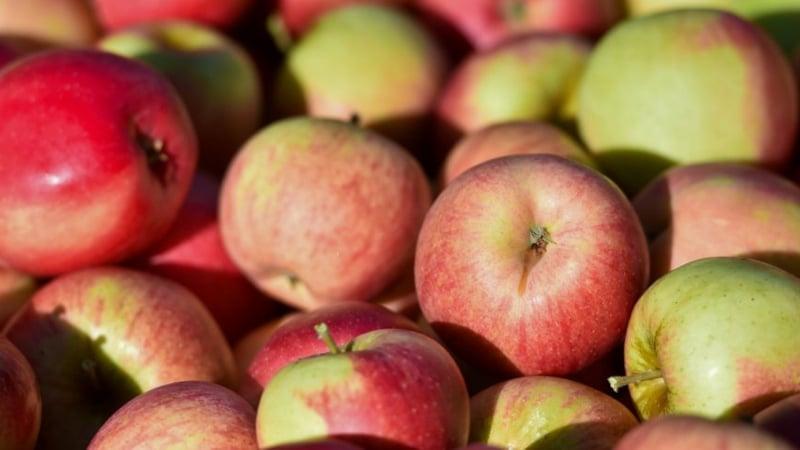 Rezepte mit Äpfeln vegan