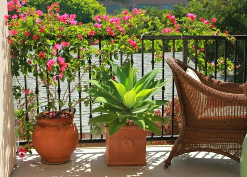 Balkonpflanzen Geländer