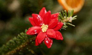 Basteln mit Naturmaterialien Weihnachten Kürbiskernsamen