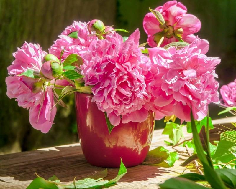 Blumenstrauß Päonien