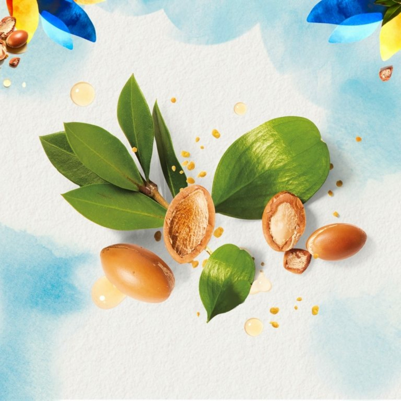 Nüsse Argansbaum
