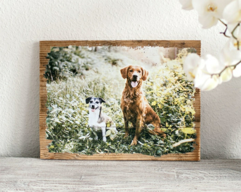 Foto auf Holz Hunde