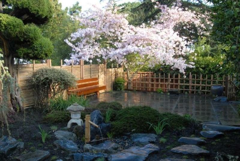 Steingarten Kirsche Blüten
