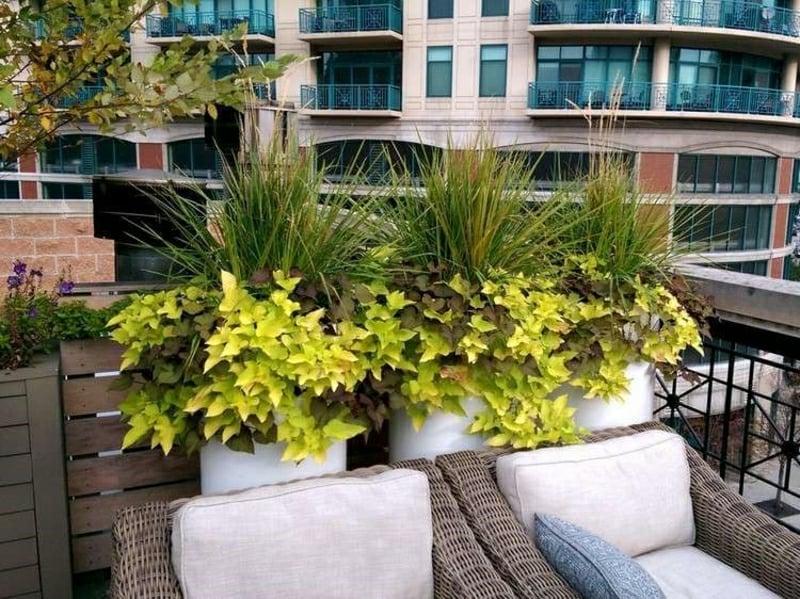 Windschutz Terrasse Balkon Ziergräser
