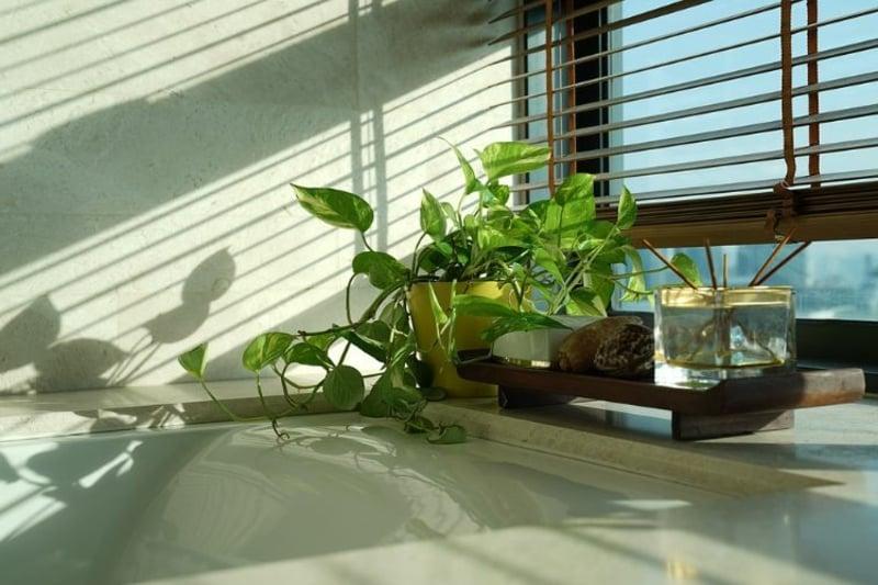 Fenstersims grüne Pflanzen Bad