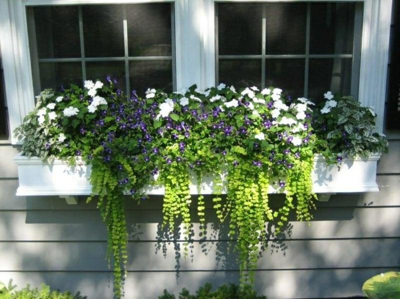 hängende Balkonpflanzen passende Sorten