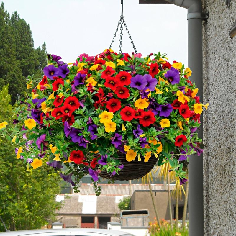 Blumenampel Petunien