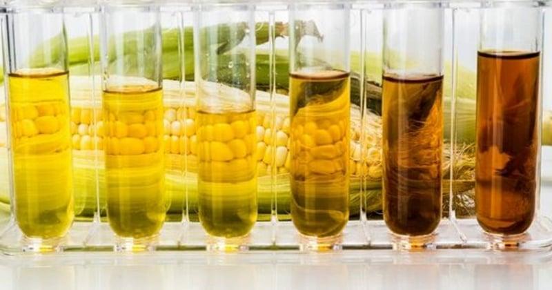 Bioethanol Herstellung