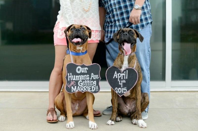 Hunde Schilder um den Hals Datum Hochzeit