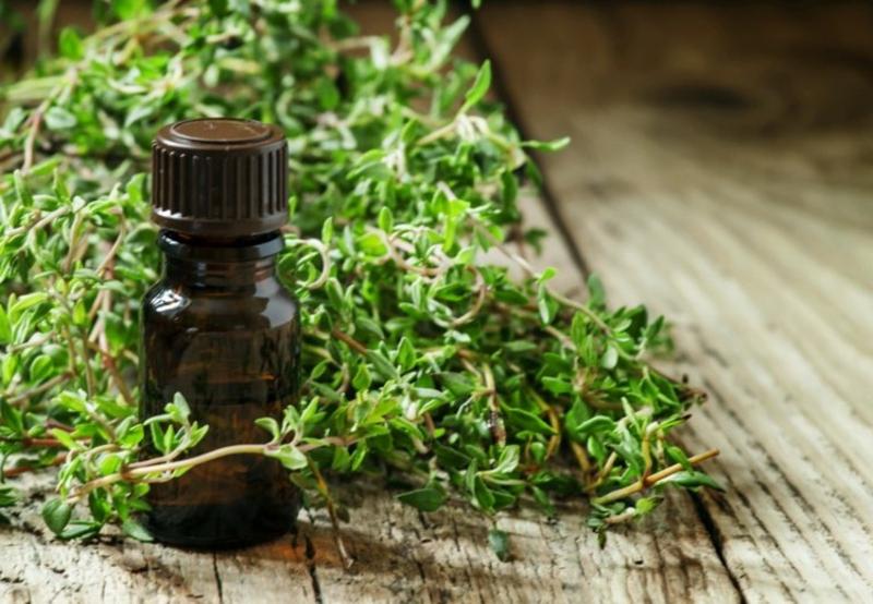 Rosmarinöl gut fürs Immunsystem