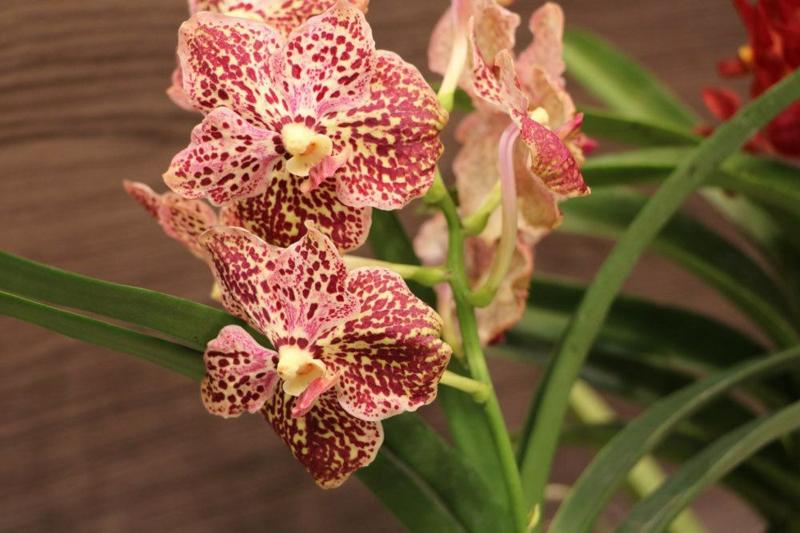 wunderschöne Orchideen Punkte