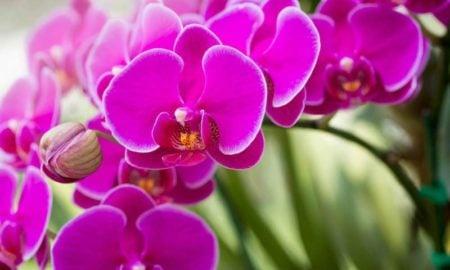 lila Orchidee wunderschön