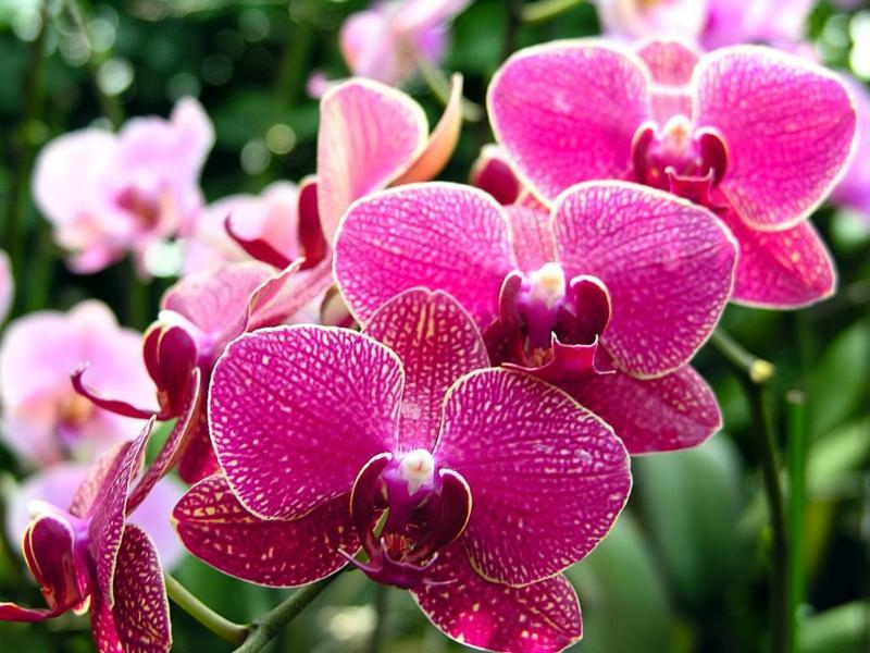 schöne Zimmerpflanzen Orchidee Pflegetipps
