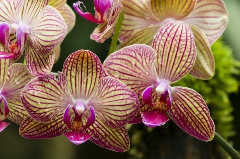 Orchidee düngen Tipps