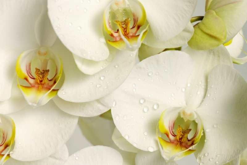 Orchidee düngen wie geht es