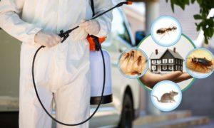 Umweltfreundliche Schädlingsbekämfung: für die perfekte Hygene Ihres Haushalts