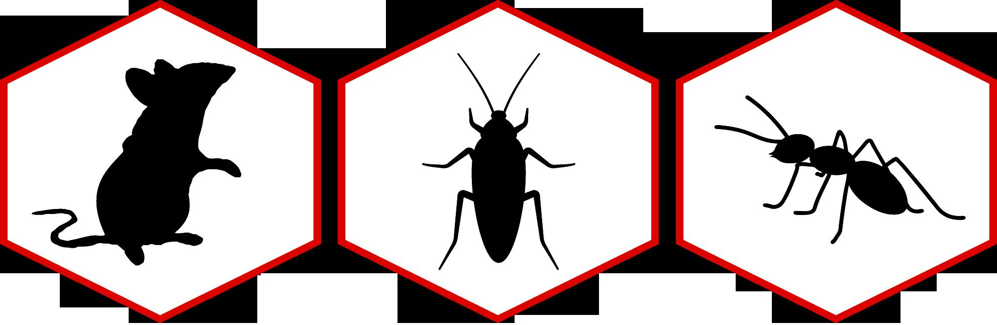 Schädlingsbekämpfung: häufigste Problemme