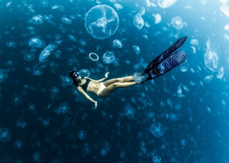 virtuelle Reise Unterwasserwelt