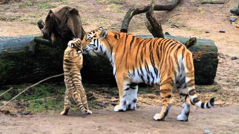 virtuelle Reise mit Kindern Tiere Zoo
