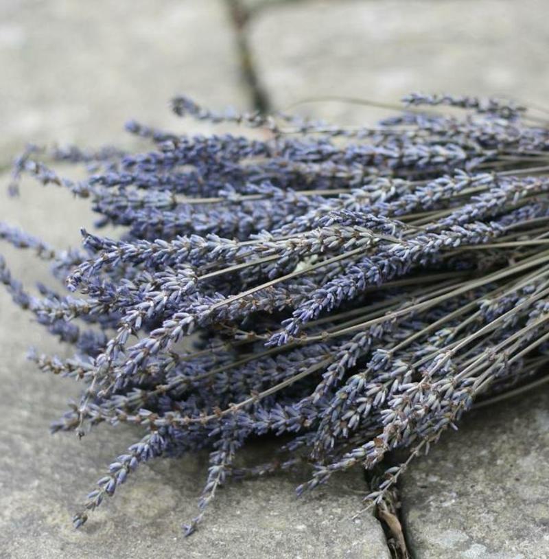 Kräuter für Haarpflege Lavendel